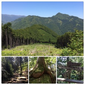 遠藤クリニック 職員 登山 熊野古道